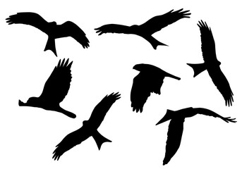 Set of realistic vector illustrations of silhouettes of flying birds of prey isolated