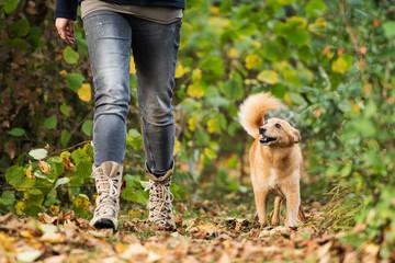 Mit dem Hund durch den Herbst