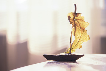 The sailing ship from the oak tree and leaf.