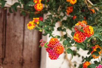 Colorful flowers at the door