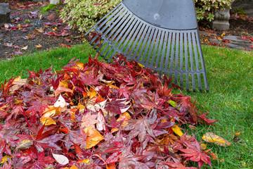 Raking Fall Leaves in Garden Yard autumn season