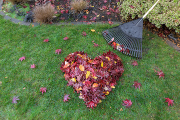 Fallen Leaves Raked into Heart Shape on Green Grass Lawn