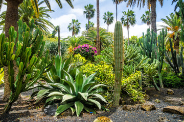 Amazing view of  cactus park area in Garcia Sanabria park. Location: Cacti garden in Santa Cruz de Tenerife, Tenerife, Canary Islands. Artistic picture. Beauty world.