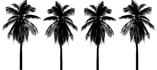silhouette coconut tree  Isolated on white background