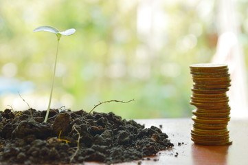 gold coin arrange and little plant in dirt on wooden board