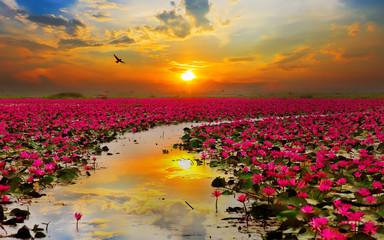Printed kitchen splashbacks Lotus flower nature