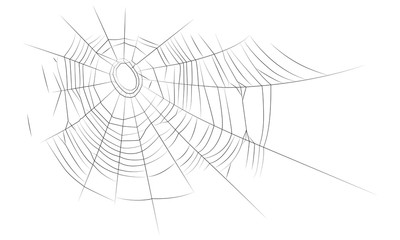 The old web; The old web, graphics, linear drawing. Vector image, isolated on white background