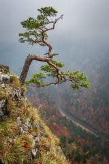 Foggy Sokolica peak in Pieniny mountains at sunrise in autumn