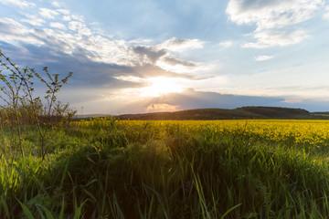 landscape, Ukrainian landscape, sunset in the field, apple blossom