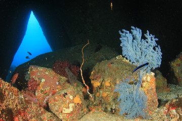 Fish and coral in underwater cave
