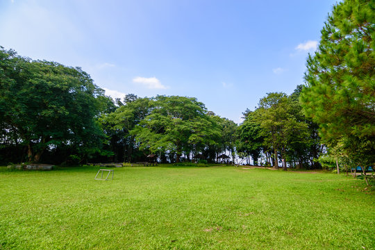 green lawn and trees in garden landscape