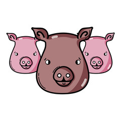 cute pigs heads wilds animals