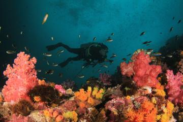 Scuba diving. Scuba divers explore coral reef underwater