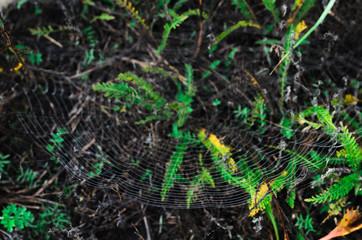 morning fog, autumn. field dry vegetation covered in cobwebs .