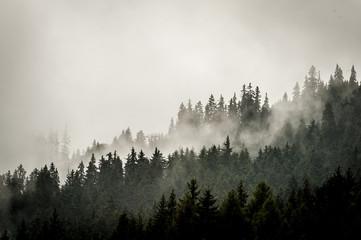 Poster Morning with fog Paysage brumeux en montagne