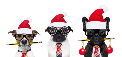dog office workers on christmas holidays