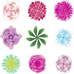 Flower set. Beautiful coloured flowers and leaves isolated on white background. Vector illustration. Clipart, icons