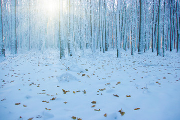 Winter forest on sun