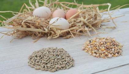 céréales et granulés pour ponte d'œufs de poule