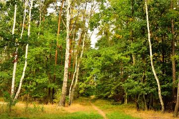 Jesienne i wiosenne drzewa, brązowe liście i zielona trawa.