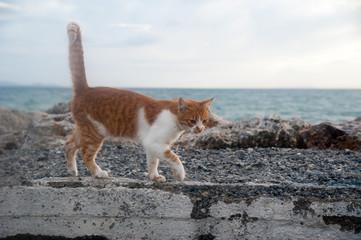Neugierige Katze auf Hafenmauer