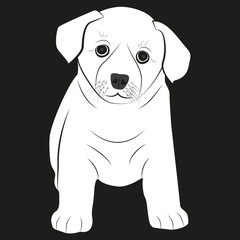 Picture of a puppy. Little dog