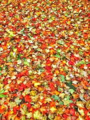 Fallen leaves of different colors on the laying ground