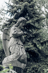 Stone Angel on his knees in the old cemetery - vintage toning