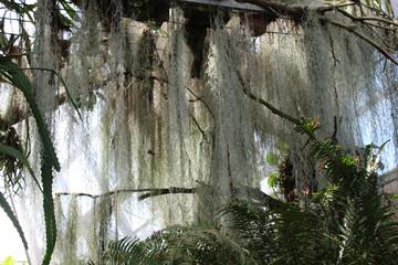 Baum Ranke und Farn