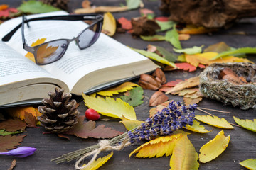 Old books among the autumn leaves under soft sunlight