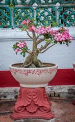 bonsaï à fleurs roses