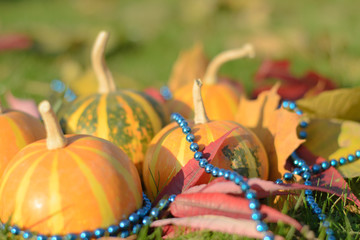 blue decoration on striped pumpkins