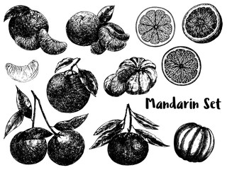 Hand drawn sketch set of mandarin orange fruits. Whole fruit with leaf and sliced. Vector illustration isolated on white background.