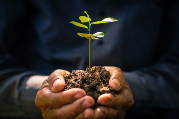 Plant growing on soil with hand holding over sunlight