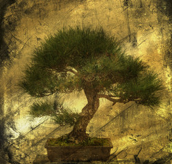 Bonsai Tree and Textured Image