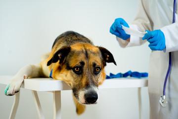 Dog at a vet