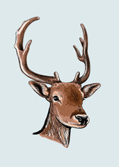 Sketch of the head of a young deer with horns. Vector illustration.