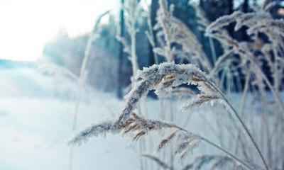 Winter landscape.Frozenned flower