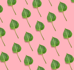 Wall Mural - leaf of monstera plant