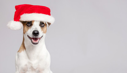 Happy dog in christmas hat