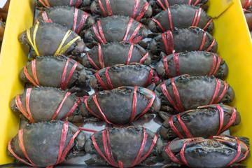 Live mud crab (Scylla serrata) tied and row display for sale in sea food market Thailand.