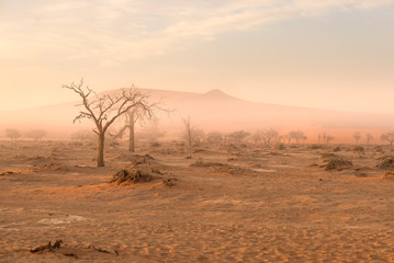 Sossusvlei, Namibia. Acacia tree and sand dunes in morning light, mist and fog. Namib desert, roadtrip in the Namib Naukluft National Park, travel destination in Africa.
