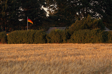 Barley field at evening with german Flag