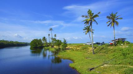 Coconut tree over blue sky background. Copyspace area.