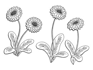 Daisy flower graphic black white isolated sketch illustration vector