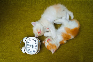 Portrait of kittens  sleeping with white alarm clock on the sofa.