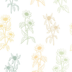 Bidens flower graphic color seamless pattern sketch illustration vector