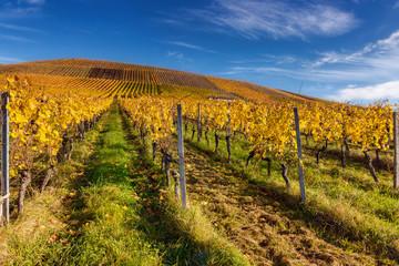 Fotobehang Wijngaard Colourful vineyards in autumn