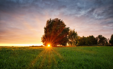 Wall Mural - birch tree foliage in morning light with sunlight. Sunrise on the field