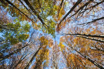 Foto op Canvas Aan het plafond I colori dell'autunno